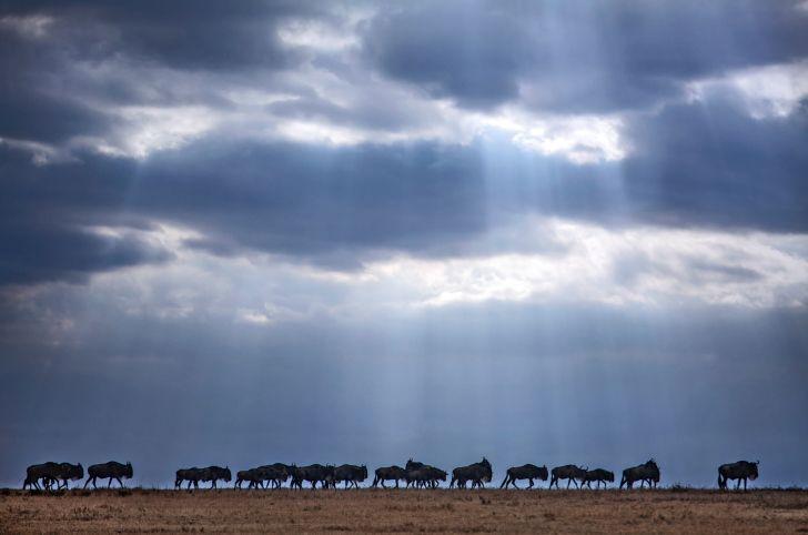 Tierherden auf Individualreise in Namibia erleben