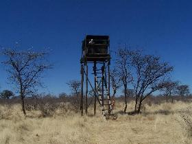 Namibia - Reise - Wildtierbeobachtung