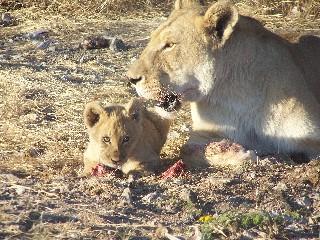 Namibia - Reisen - Reisebericht