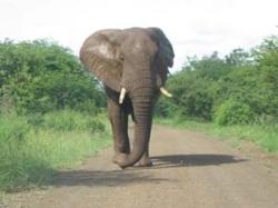 Südafrika - Reisebericht - Krüger Nationalpark