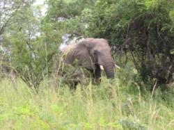Südafrika - Reisen - Krüger Park