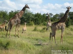 Südafrika - Mosambik - Reise