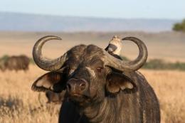 Kenia - Safari - Reise